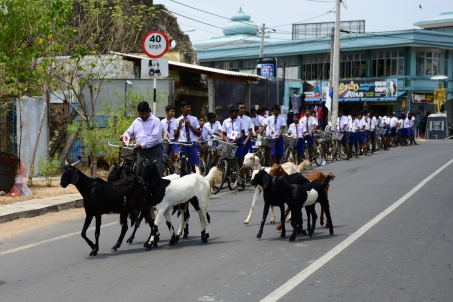 Hartley boys and goats